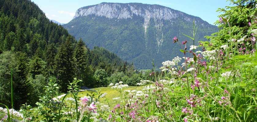 Söll, Austria - Landscape view.jpg